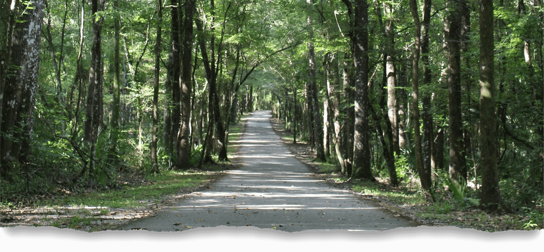 Forest path in Clay County